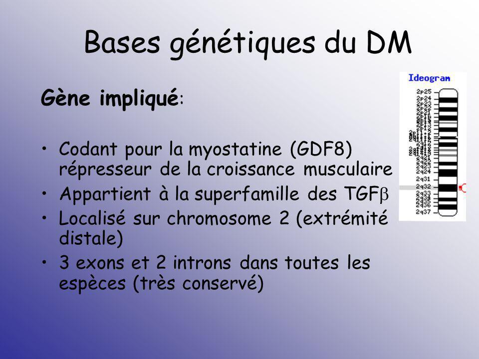 Bases génétiques du DM Gène impliqué: