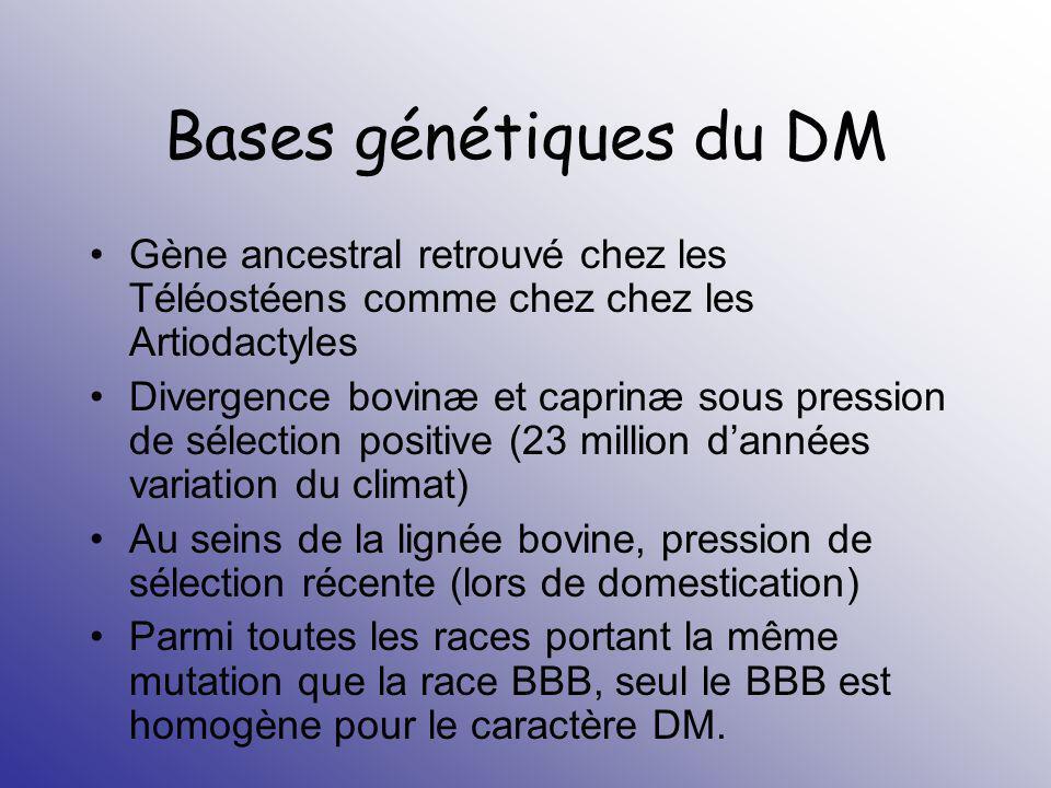 Bases génétiques du DM Gène ancestral retrouvé chez les Téléostéens comme chez chez les Artiodactyles.