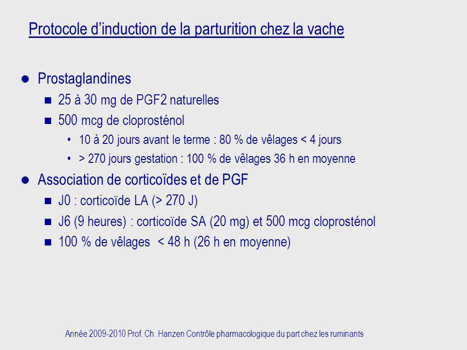 Protocole d'induction de la parturition chez la vache