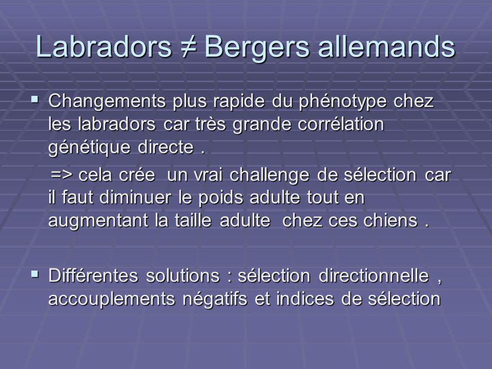 Labradors ≠ Bergers allemands