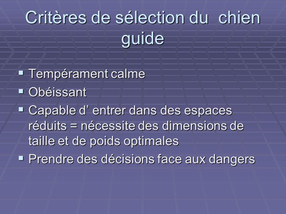 Critères de sélection du chien guide