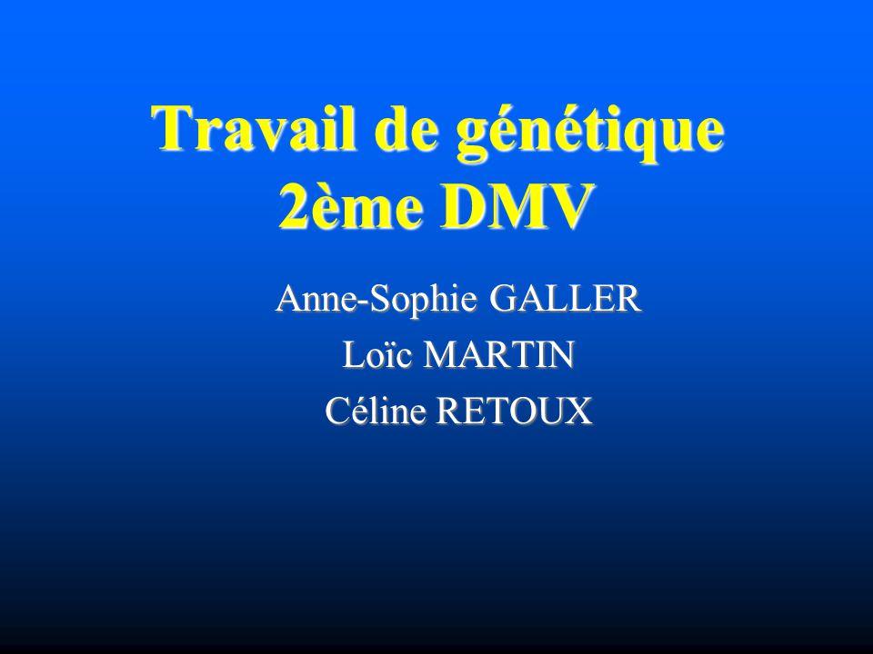 Travail de génétique 2ème DMV