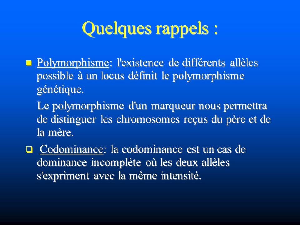 Quelques rappels : Polymorphisme: l existence de différents allèles possible à un locus définit le polymorphisme génétique.