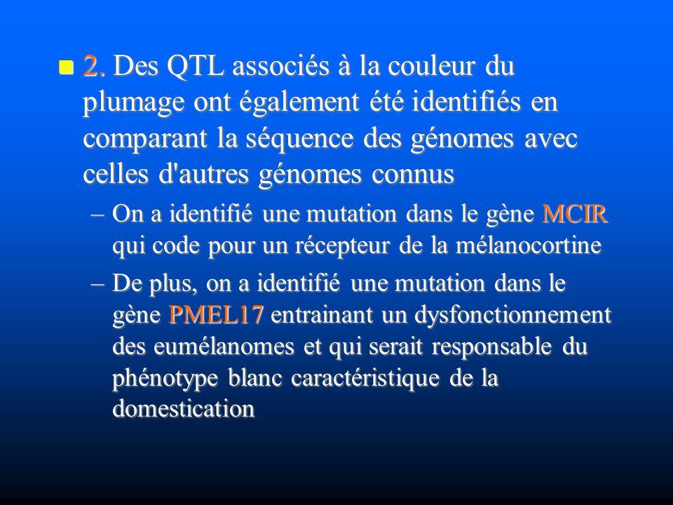 2. Des QTL associés à la couleur du plumage ont également été identifiés en comparant la séquence des génomes avec celles d autres génomes connus