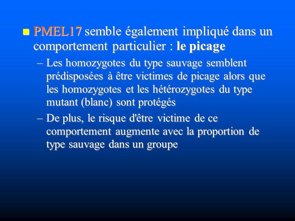 PMEL17 semble également impliqué dans un comportement particulier : le picage