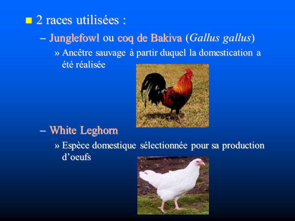 2 races utilisées : Junglefowl ou coq de Bakiva (Gallus gallus)