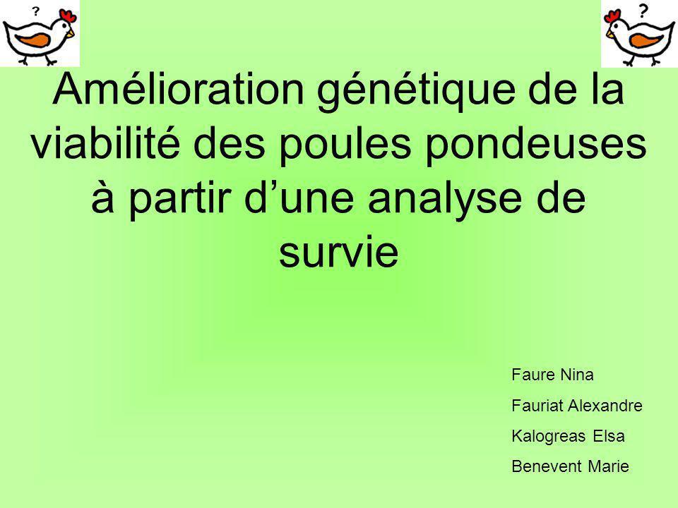 Amélioration génétique de la viabilité des poules pondeuses à partir d'une analyse de survie