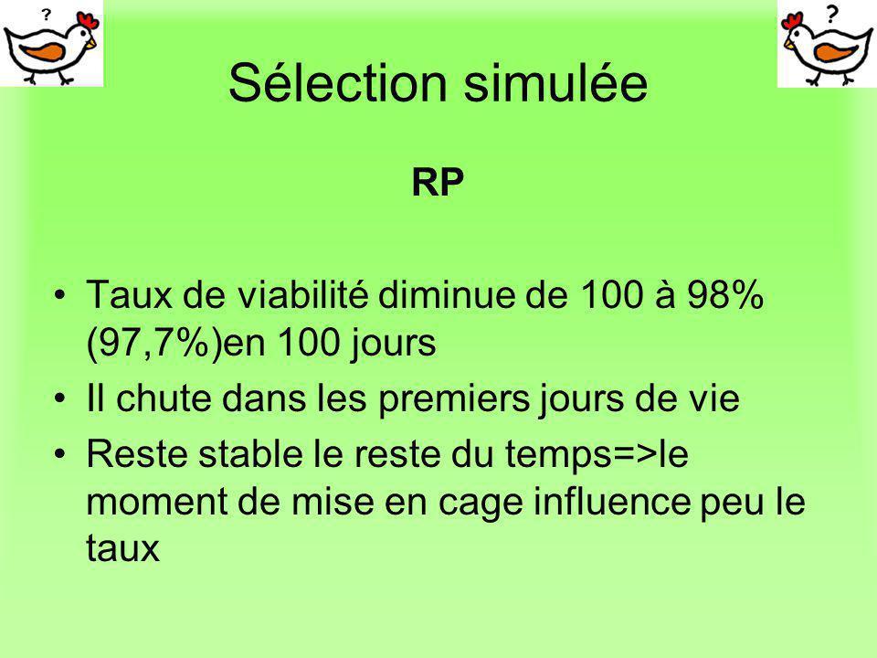 Sélection simulée RP. Taux de viabilité diminue de 100 à 98% (97,7%)en 100 jours. Il chute dans les premiers jours de vie.