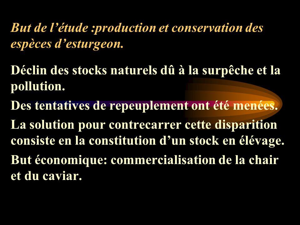 But de l'étude :production et conservation des espèces d'esturgeon.