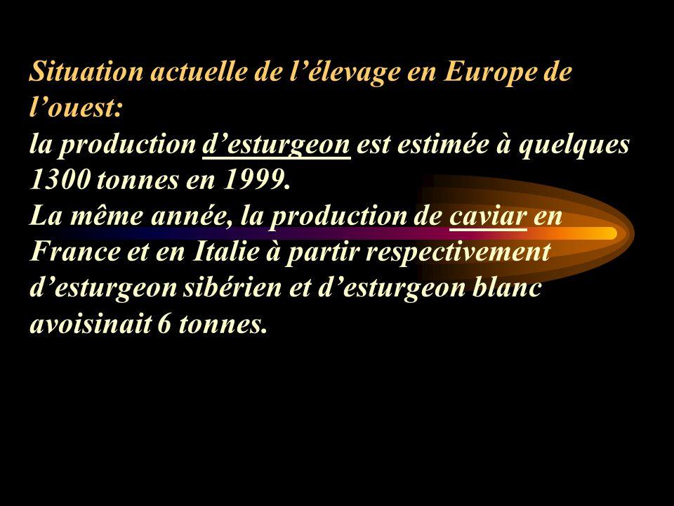 Situation actuelle de l'élevage en Europe de l'ouest: la production d'esturgeon est estimée à quelques 1300 tonnes en 1999.