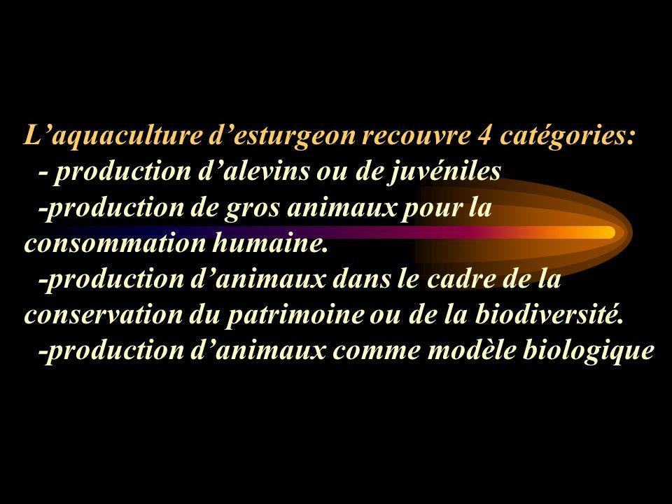 L'aquaculture d'esturgeon recouvre 4 catégories: - production d'alevins ou de juvéniles -production de gros animaux pour la consommation humaine.