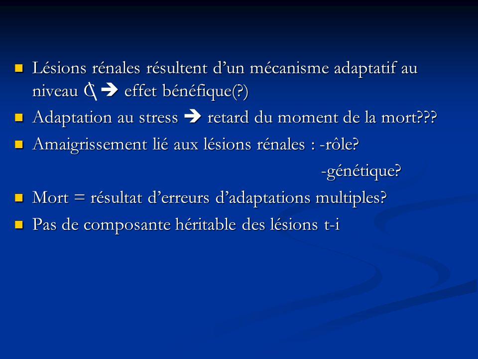 Lésions rénales résultent d'un mécanisme adaptatif au niveau C  effet bénéfique( )