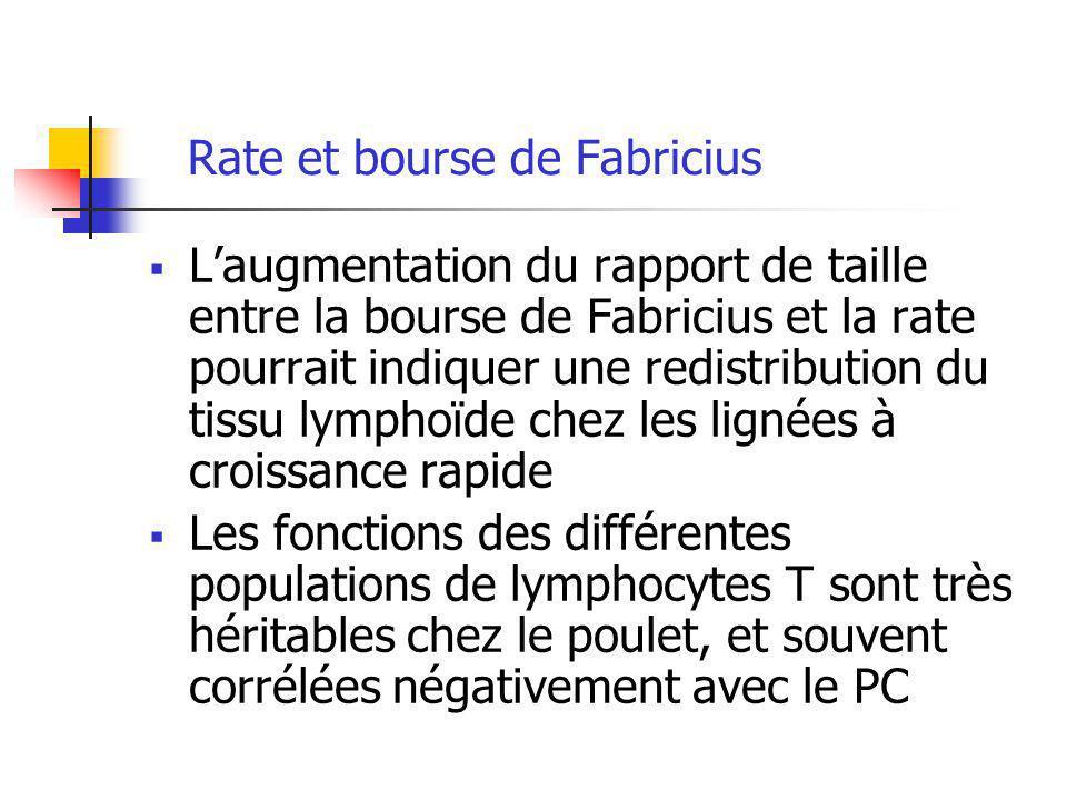 Rate et bourse de Fabricius