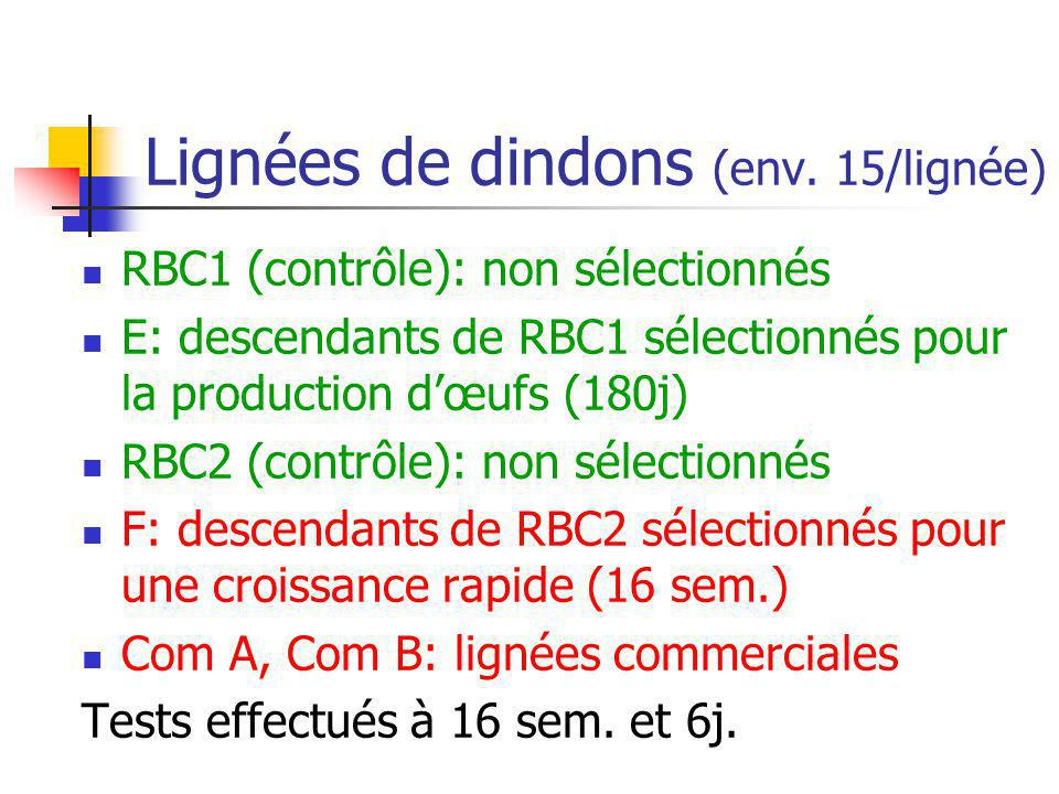 Lignées de dindons (env. 15/lignée)