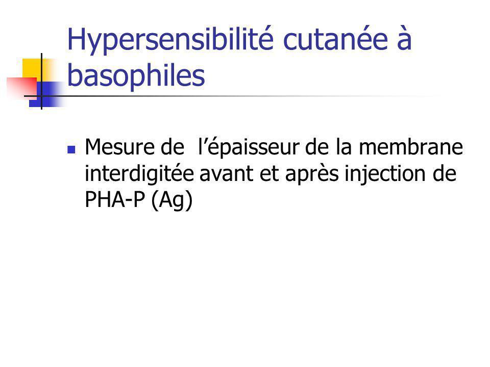Hypersensibilité cutanée à basophiles