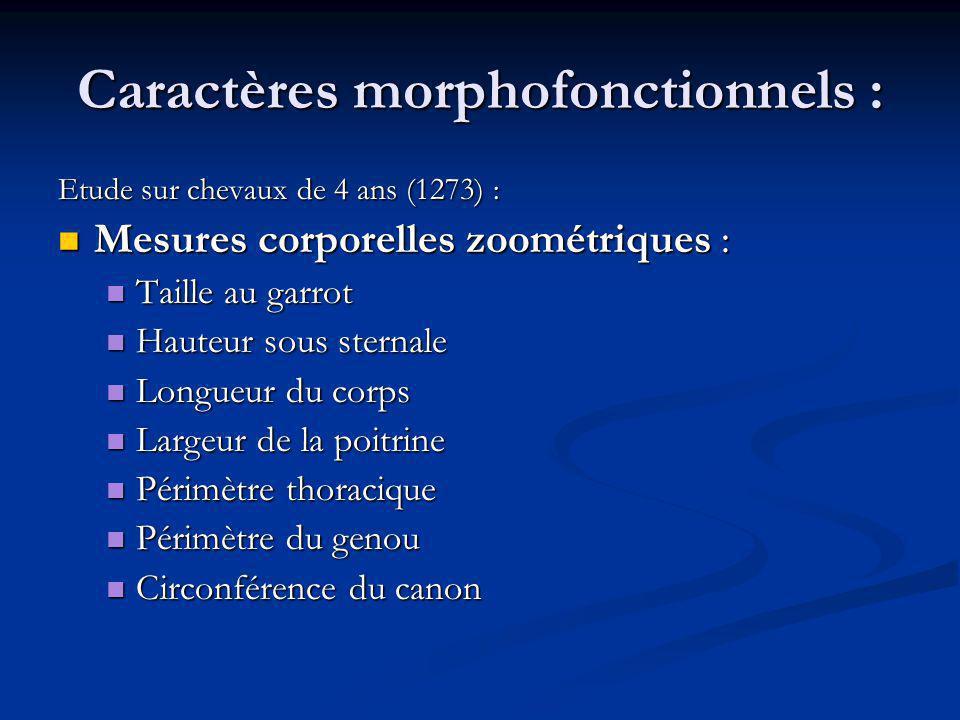 Caractères morphofonctionnels :