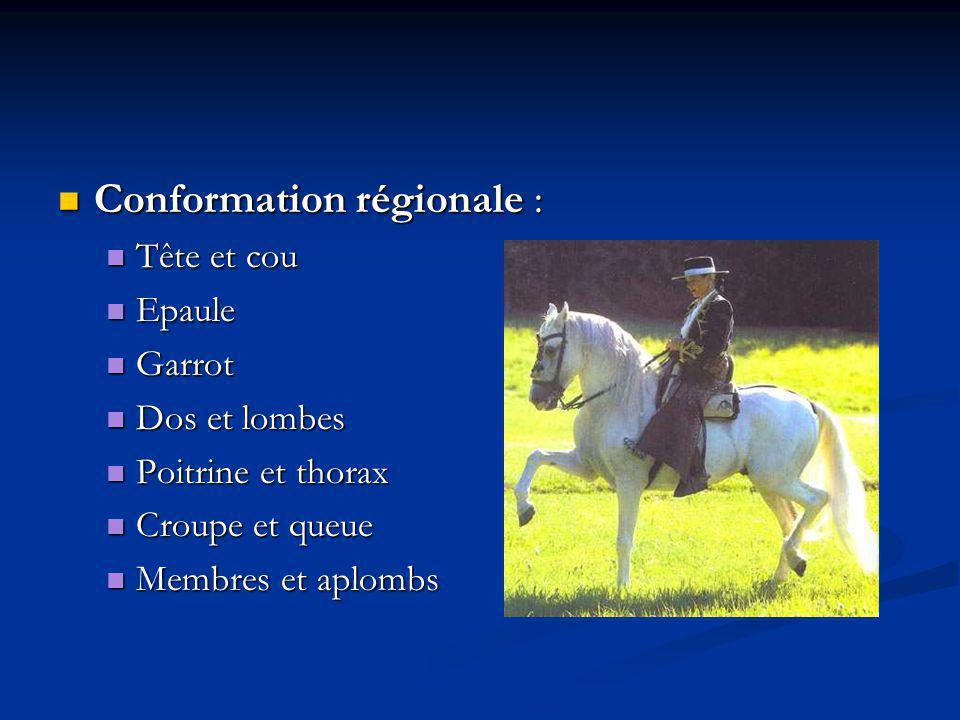 Conformation régionale :