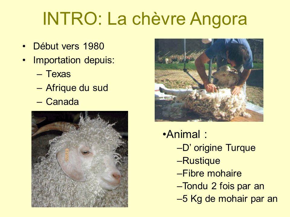INTRO: La chèvre Angora
