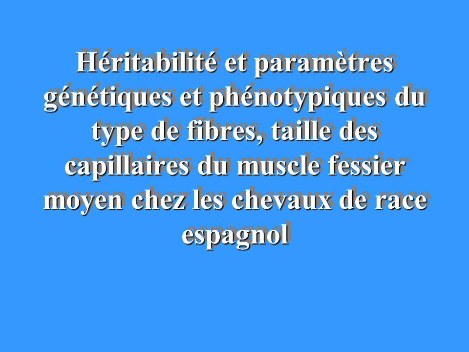 Héritabilité et paramètres génétiques et phénotypiques du type de fibres, taille des capillaires du muscle fessier moyen chez les chevaux de race espagnol