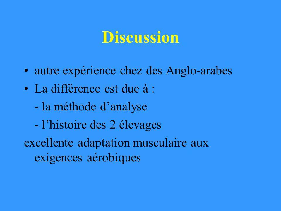 Discussion autre expérience chez des Anglo-arabes