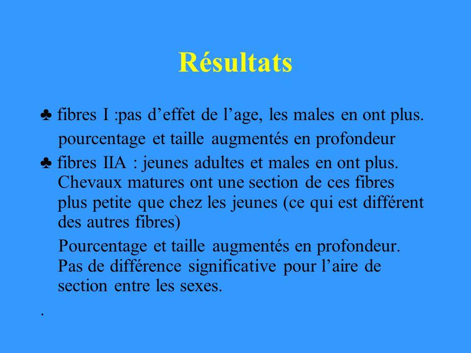 Résultats ♣ fibres I :pas d'effet de l'age, les males en ont plus.