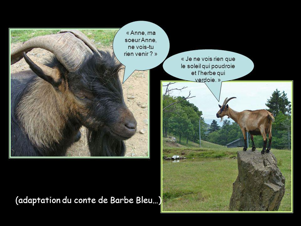 (adaptation du conte de Barbe Bleu…)