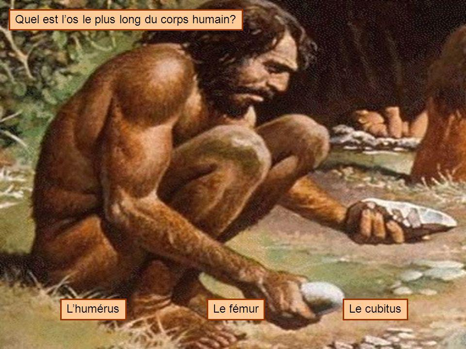 Quel est l'os le plus long du corps humain