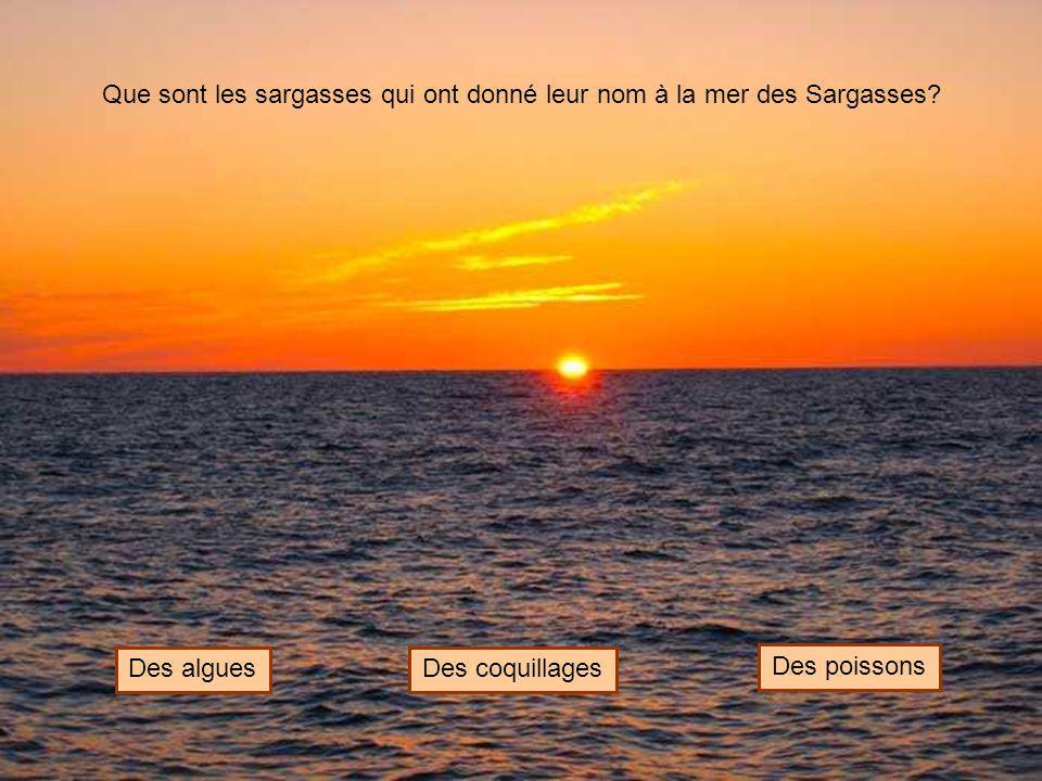 Que sont les sargasses qui ont donné leur nom à la mer des Sargasses