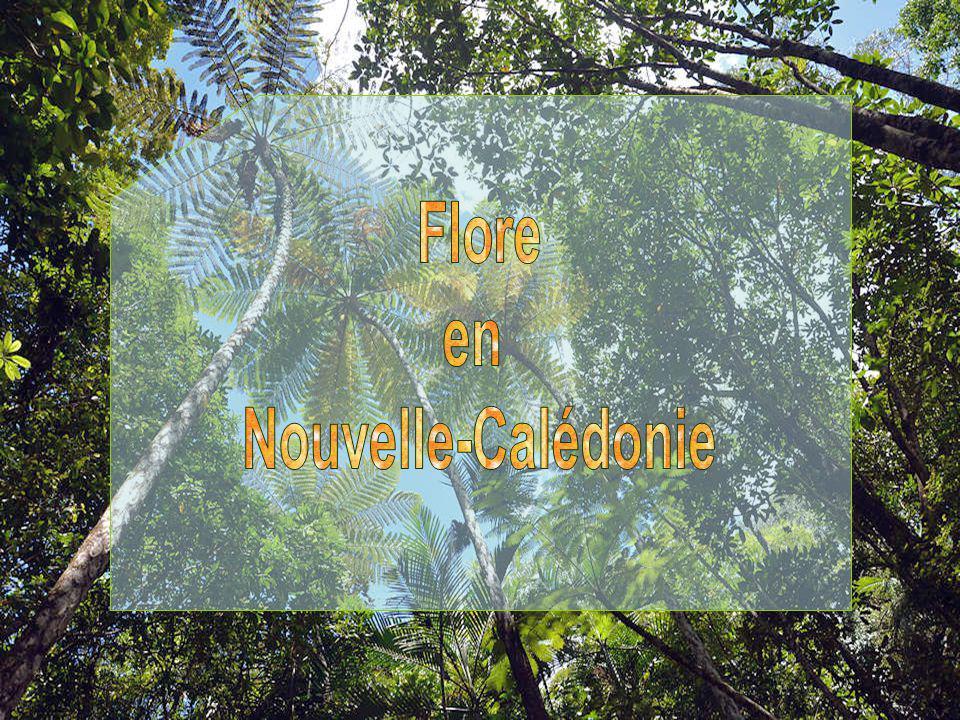 Flore en Nouvelle-Calédonie