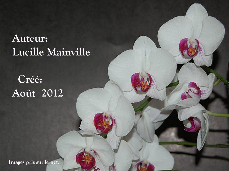 Auteur: Lucille Mainville Créé: Août 2012 Images pris sur le net.
