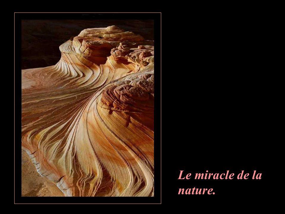 Le miracle de la nature.
