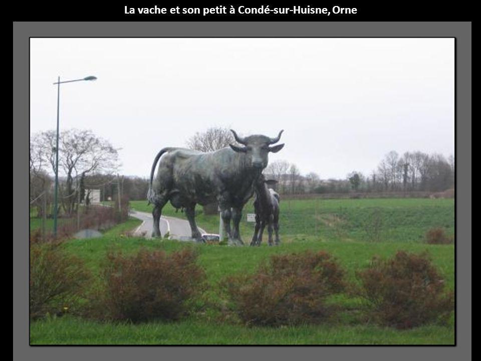 La vache et son petit à Condé-sur-Huisne, Orne