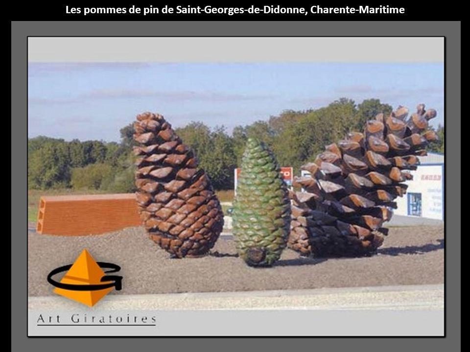 Les pommes de pin de Saint-Georges-de-Didonne, Charente-Maritime