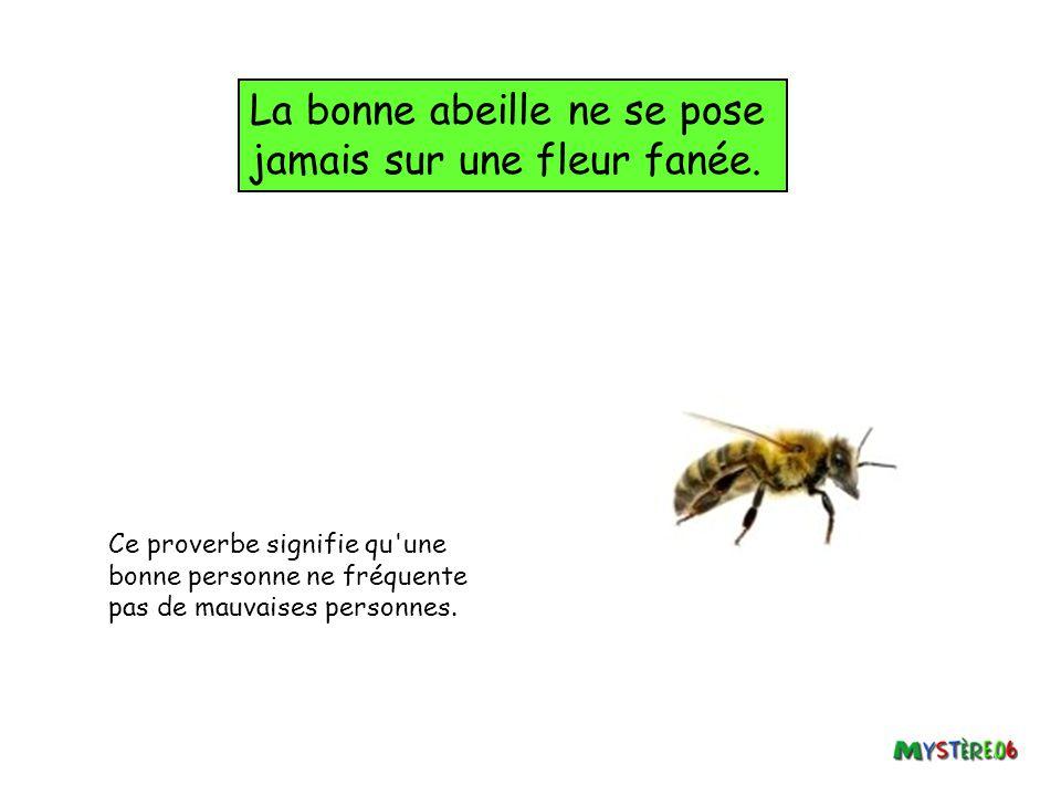 La bonne abeille ne se pose jamais sur une fleur fanée.