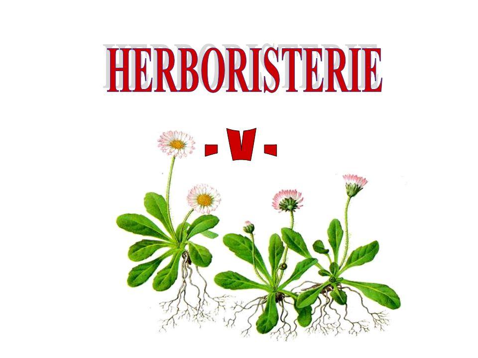 HERBORISTERIE - V -