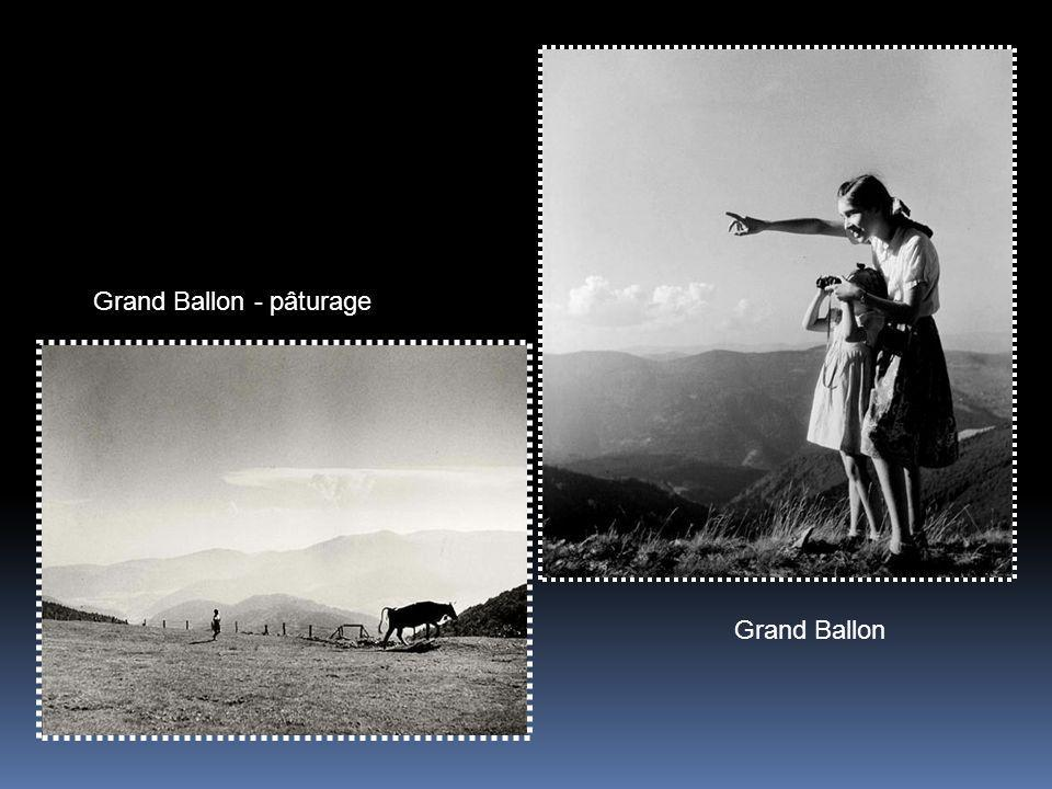 Grand Ballon - pâturage