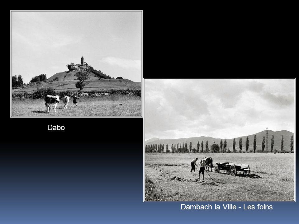 Dabo Dambach la Ville - Les foins