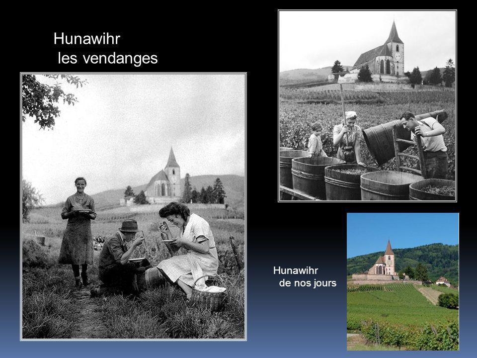 Hunawihr les vendanges Hunawihr de nos jours