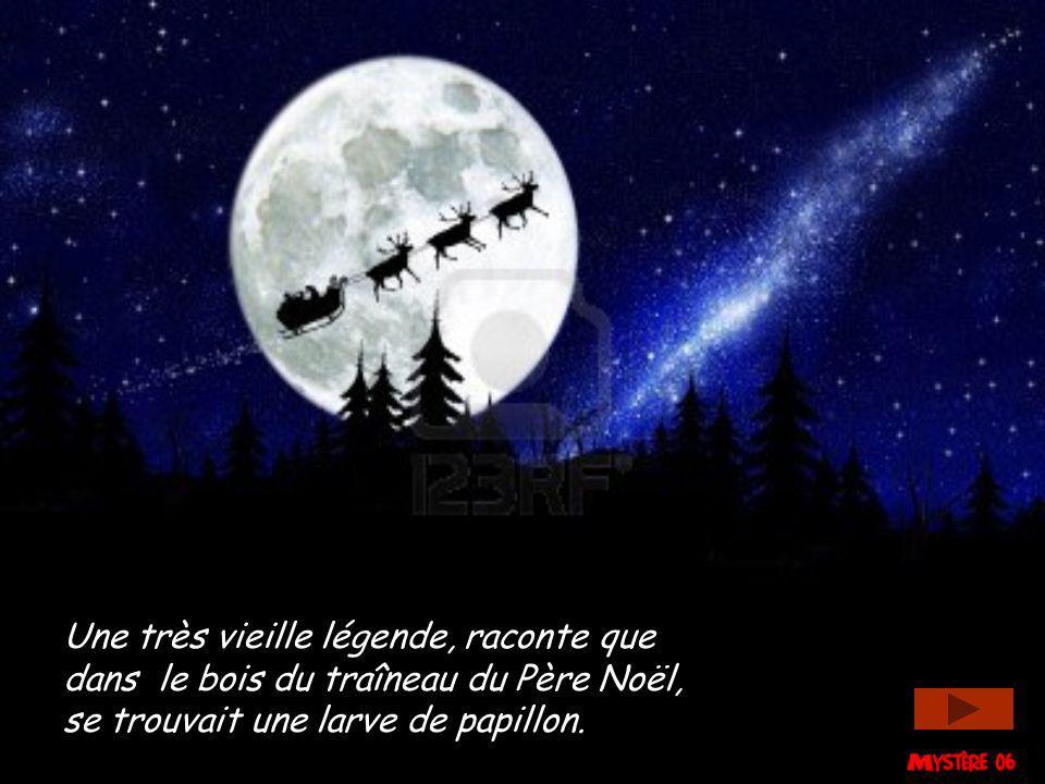 Une très vieille légende, raconte que dans le bois du traîneau du Père Noël, se trouvait une larve de papillon.