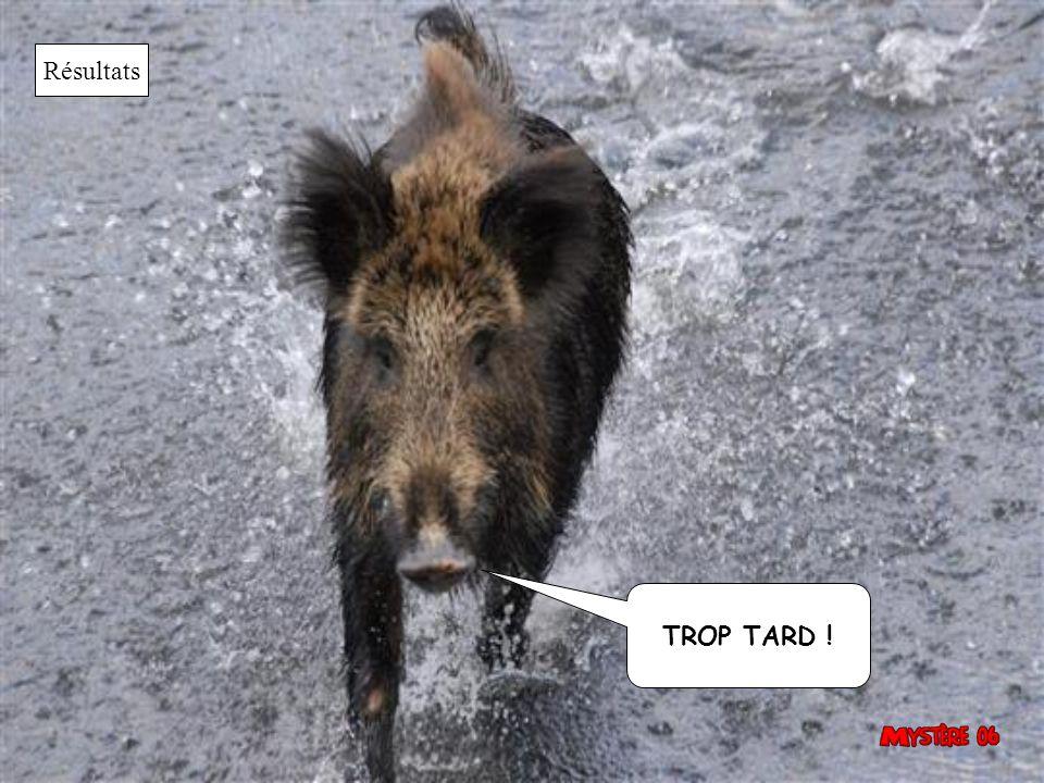 Résultats TROP TARD !