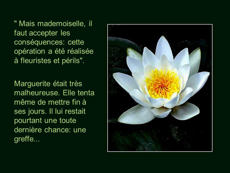 Mais mademoiselle, il faut accepter les conséquences: cette opération a été réalisée à fleuristes et périls .