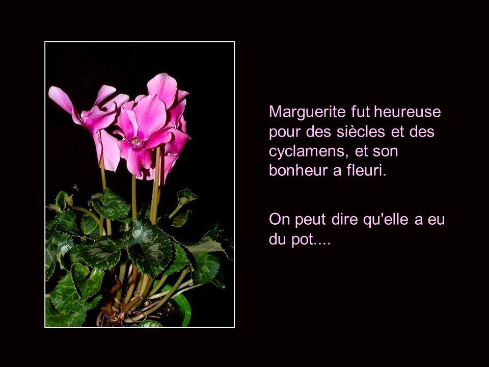 Marguerite fut heureuse pour des siècles et des cyclamens, et son bonheur a fleuri.