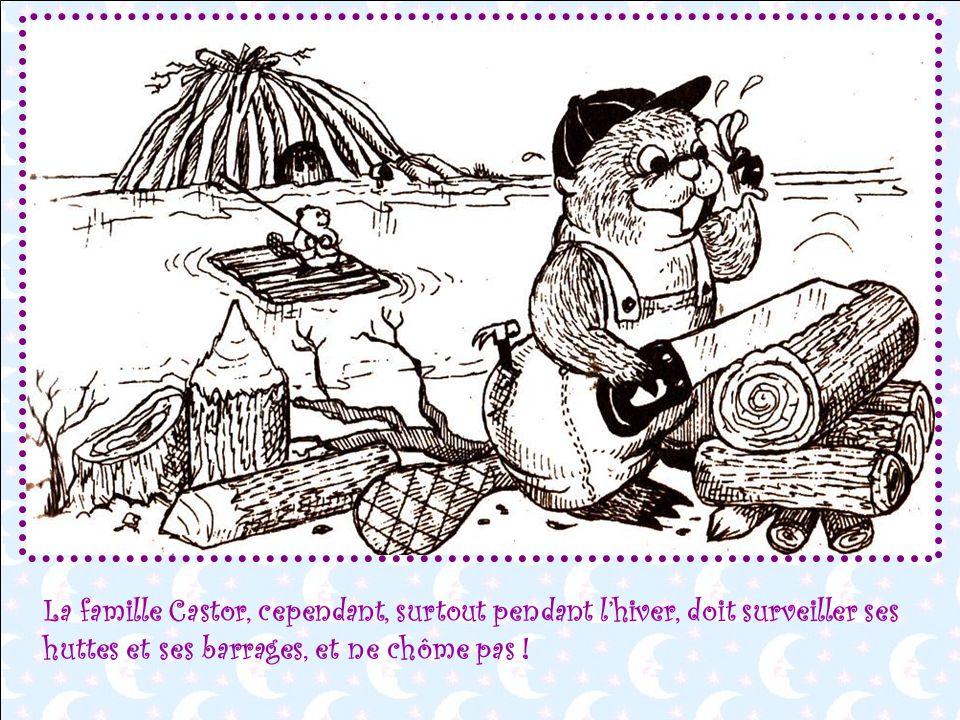 La famille Castor, cependant, surtout pendant l'hiver, doit surveiller ses huttes et ses barrages, et ne chôme pas !