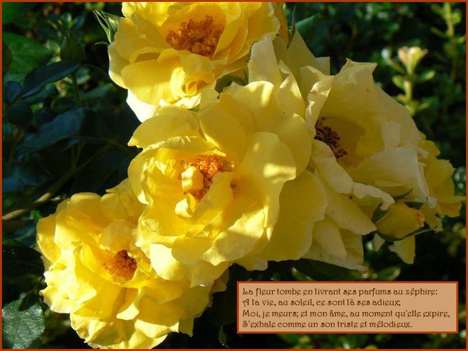 La fleur tombe en livrant ses parfums au zéphire: A la vie, au soleil, ce sont là ses adieux; Moi, je meurs; et mon âme, au moment qu elle expire, S exhale comme un son triste et mélodieux.