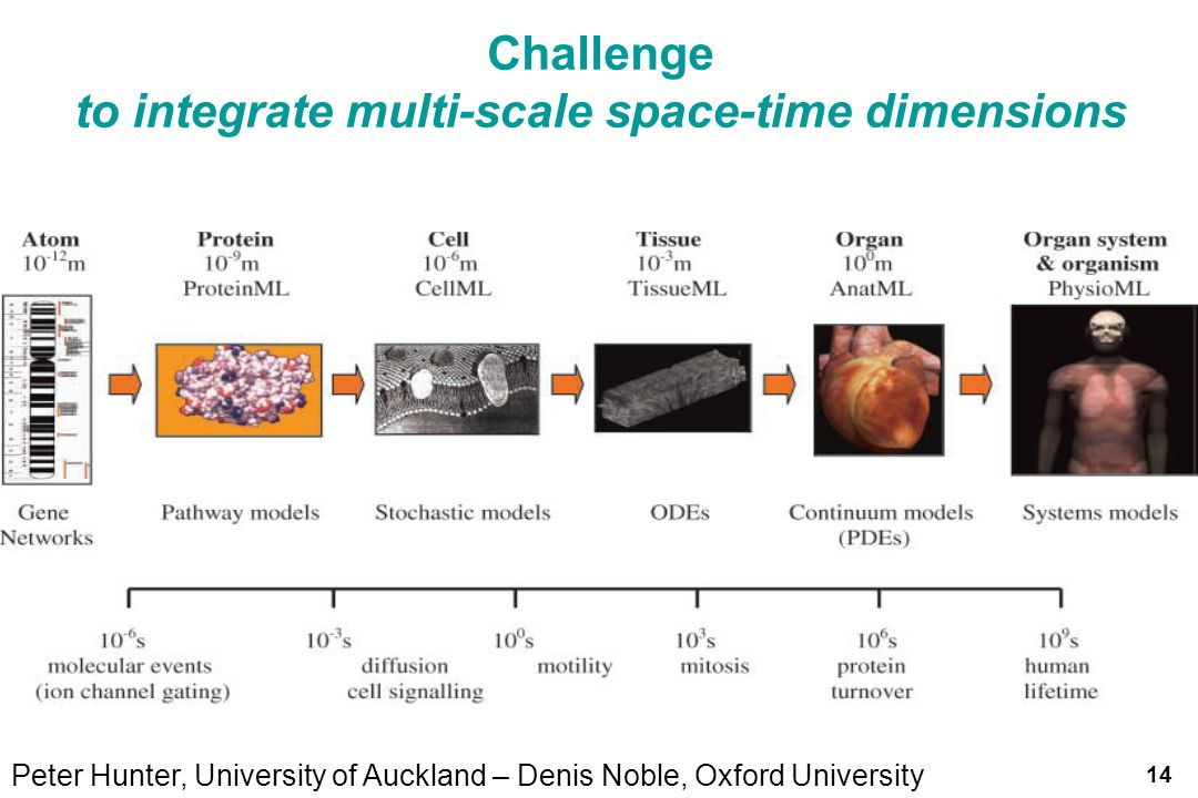 to integrate multi-scale space-time dimensions