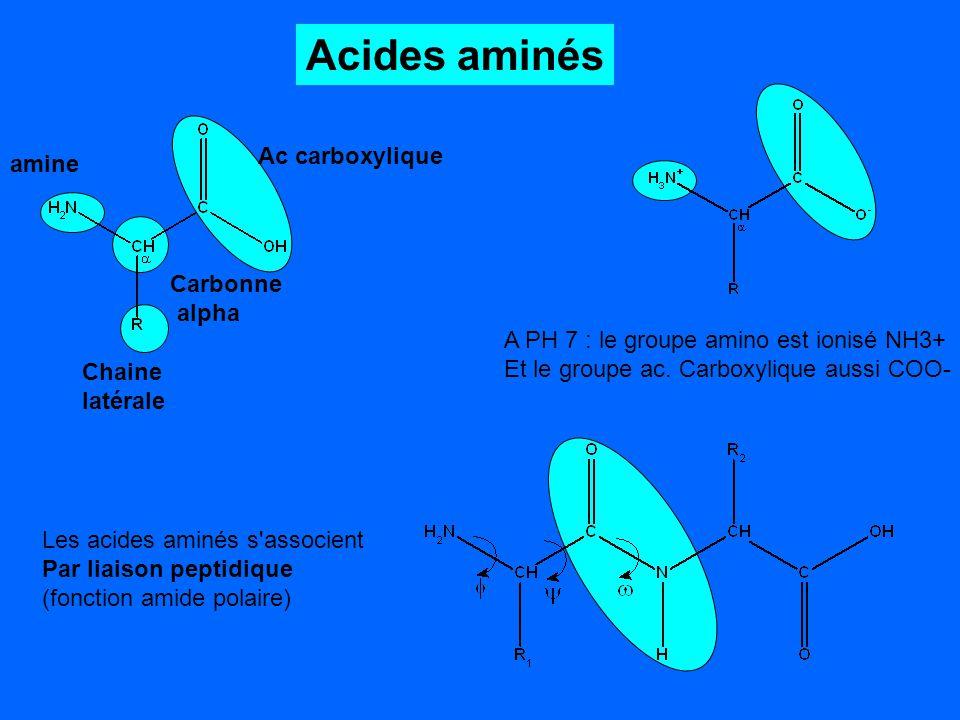 Acides aminés Ac carboxylique amine Carbonne alpha