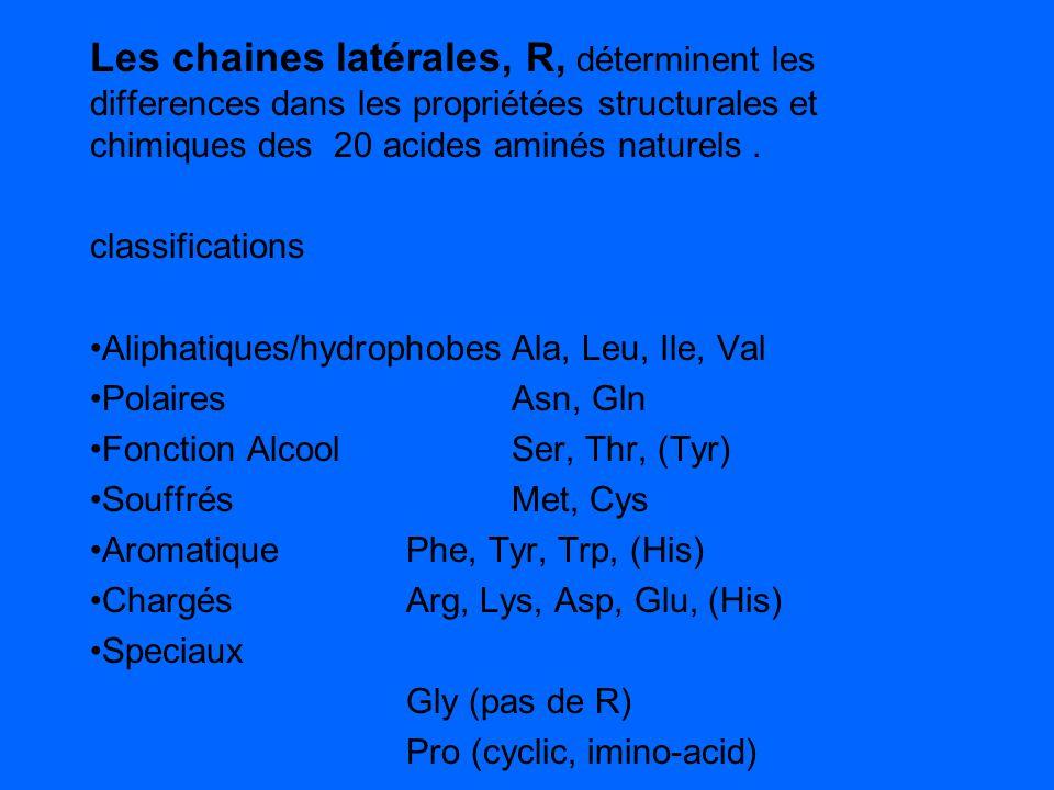 Les chaines latérales, R, déterminent les differences dans les propriétées structurales et chimiques des 20 acides aminés naturels .