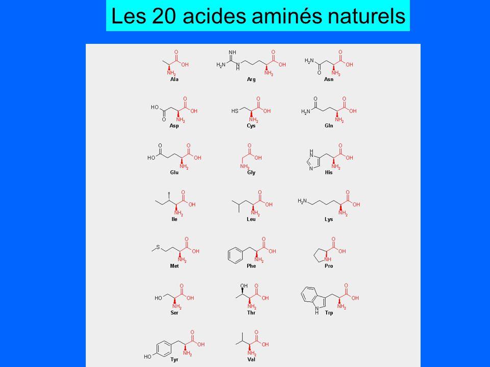 Les 20 acides aminés naturels