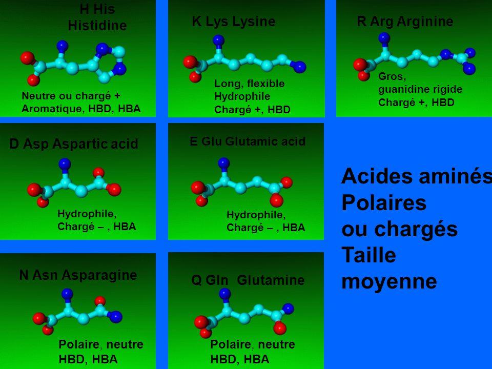 Acides aminés Polaires ou chargés Taille moyenne H His Histidine