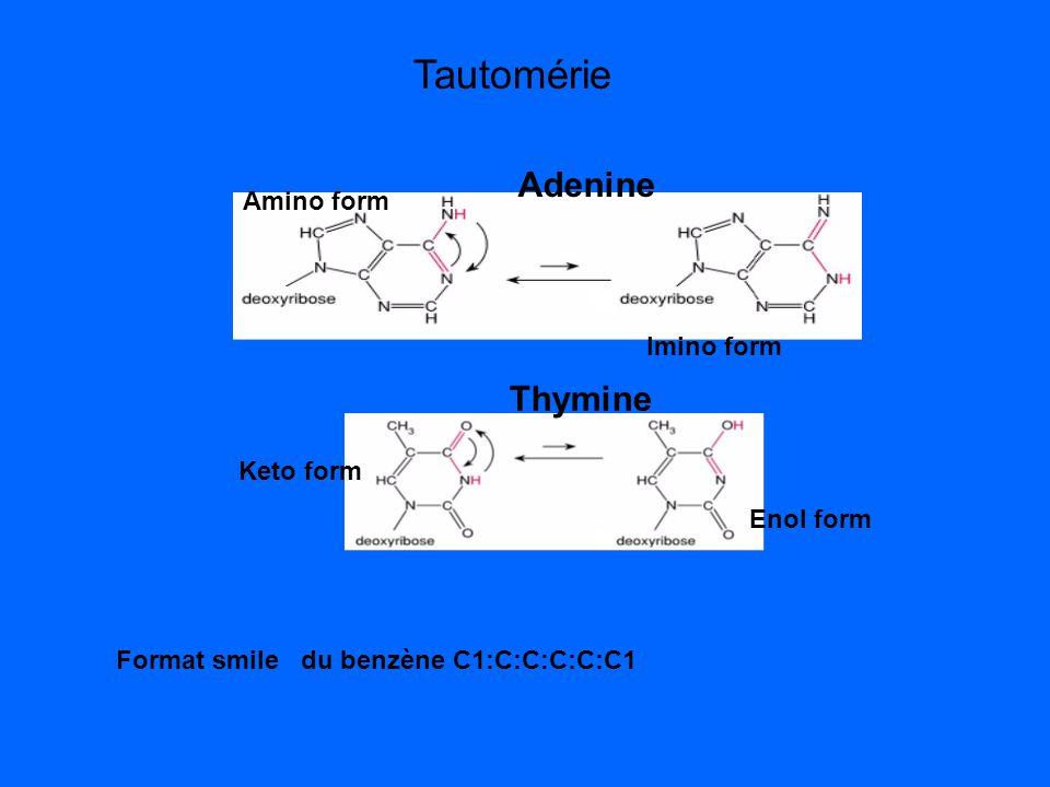 Tautomérie Adenine Thymine Amino form Imino form Keto form Enol form